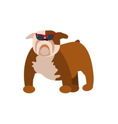funny pug dog vector image