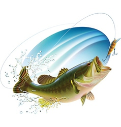 Largemouth bass catching bite vector image vector image