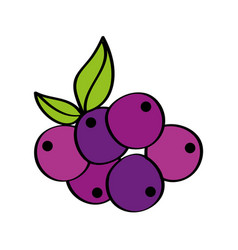 grapes fresh fruit drawing icon vector image