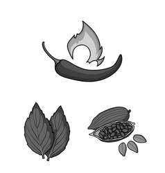 Herb and spices monochrome icons in set collection vector