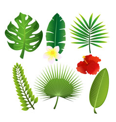 set exotic tropical leaves vector image
