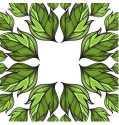 square frame with hand drawn green leaves vector image