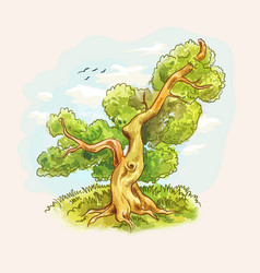 watercolor old oak tree vector image