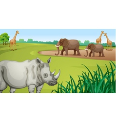 Various Animals vector image vector image