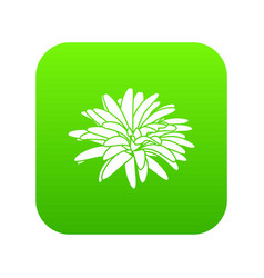 aster flower icon green vector image