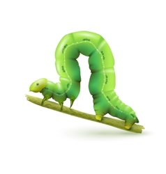 Caterpillar realistic isolated vector image vector image