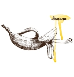 Hand drawn banana vector image