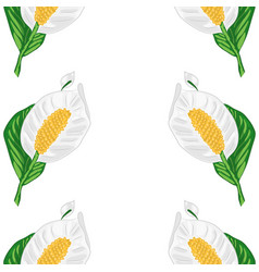 seamless of white spathiphyllum vector image