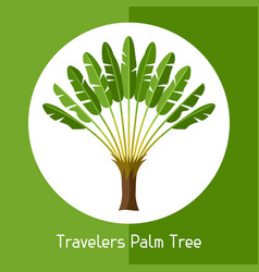 Travelers palm tree of exotic vector
