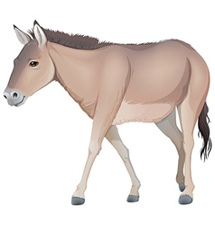 A donkey vector image vector image