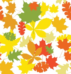 seamless autumn leaves white vector image