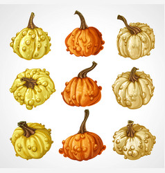 Big set pumpkins different colors isolated on vector