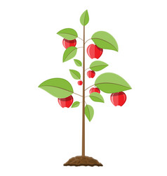 decorative fruit tree vector image