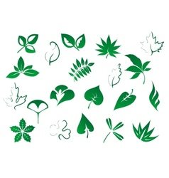 Green tree and plants leaves set vector image