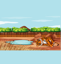 Scene with tiger in open zoo vector
