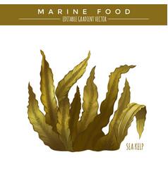 Sea Kelp Marine Food vector