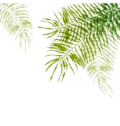 hand drawn palm tree leaves vector image vector image