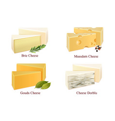 cheese kinds set vector image