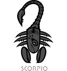 Image of scorpio astrological sign of zodiac vector