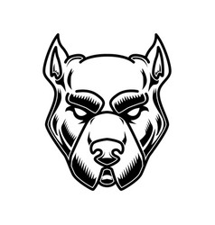 Pitbull head in engraving style design element vector