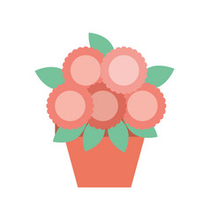 potted flower decoration natural indoor vector image