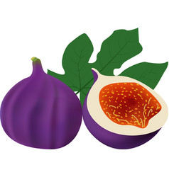 whole fig with slice solated on white background vector image vector image