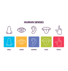 Human senses informative poster with body parts vector