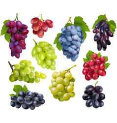 Realistic grapes set collection vector