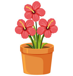 red flowers in clay pot on white background vector image