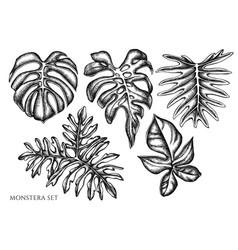 Set hand drawn black and white monstera vector