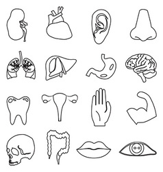Body parts line icons set vector image