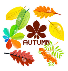 autumn sale background with leaves vector image