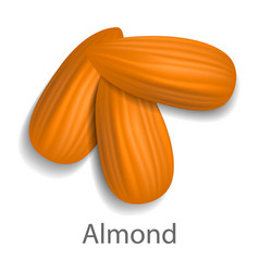 Almond mockup realistic style vector