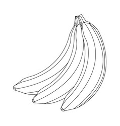 Banana fruit delicious nutrition image outline vector