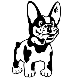 Cartoon french bulldog black white vector