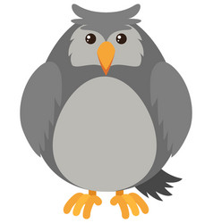 Gray owl on white background vector