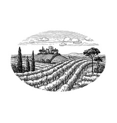 Hand drawn vineyard landscape vector