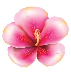 Pink hibiscus vector
