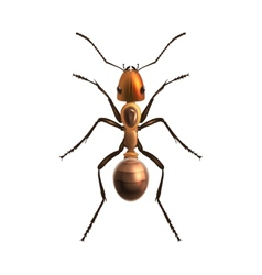 Realistic ant isolated vector