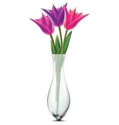 Bouquet of tulips in a glass vase vector image
