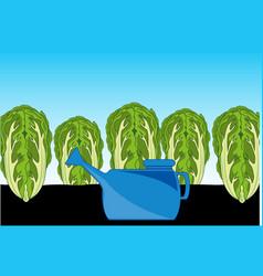 Cabbage peking in vector