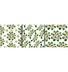 Plumeria seamless patterns set for textile print vector