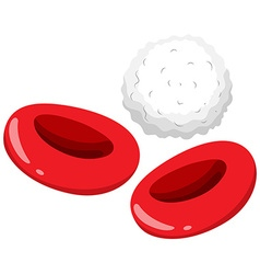 Red and white blood cells vector