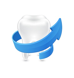 All around protected human teeth on white vector image
