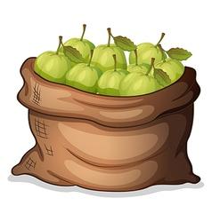 A sack of guavas vector