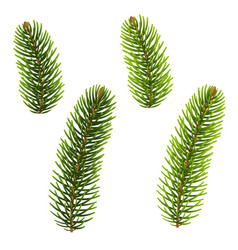 fir tree isolated vector image