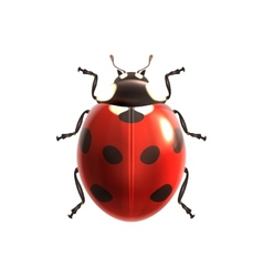 Ladybug realistic isolated vector