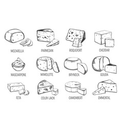 Set of isolated sketches of cheese types vector