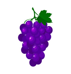 cartoon fresh grapes isolated on white background vector image