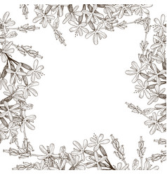 frame of wild herbal flowers hand drawn vector image